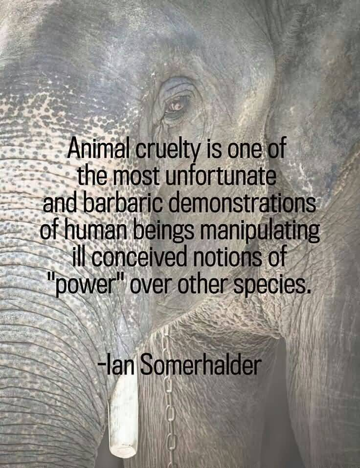 Animal cruelty is one of the most unfortunate and barbaric demonstrations - Lan Somerhalder