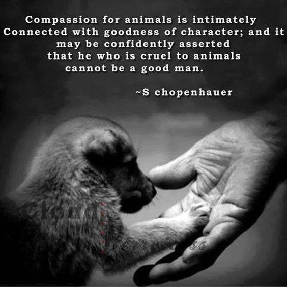 Compassion for animals is intimately connected with goodness of character - S chopenhauer