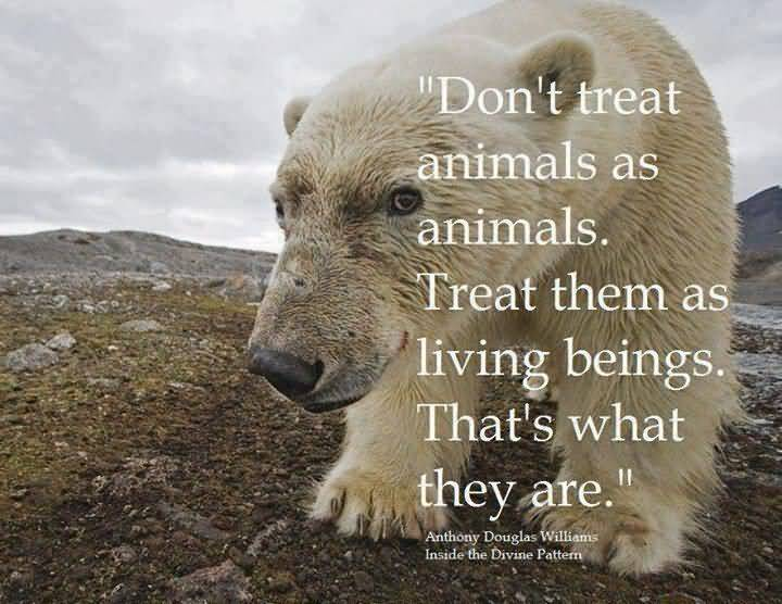 Don't treat animals as animals. Treat them as living beings. That's what they are. -Anthony Douglas Williams