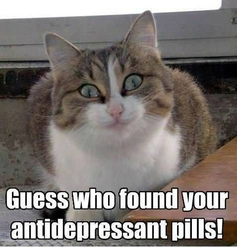 Guess who found your antidepressant pills