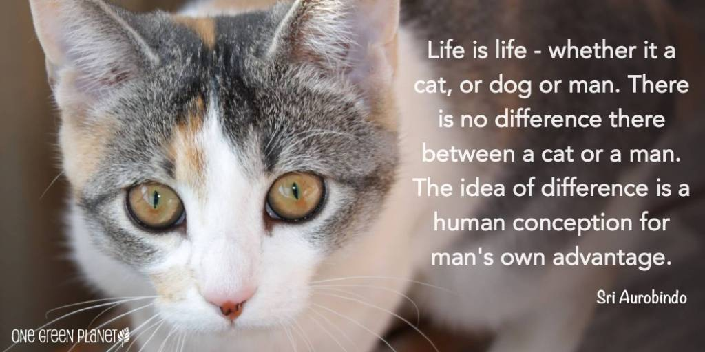 Life is life whether it a cat or dog or man - Sri Aurobindo