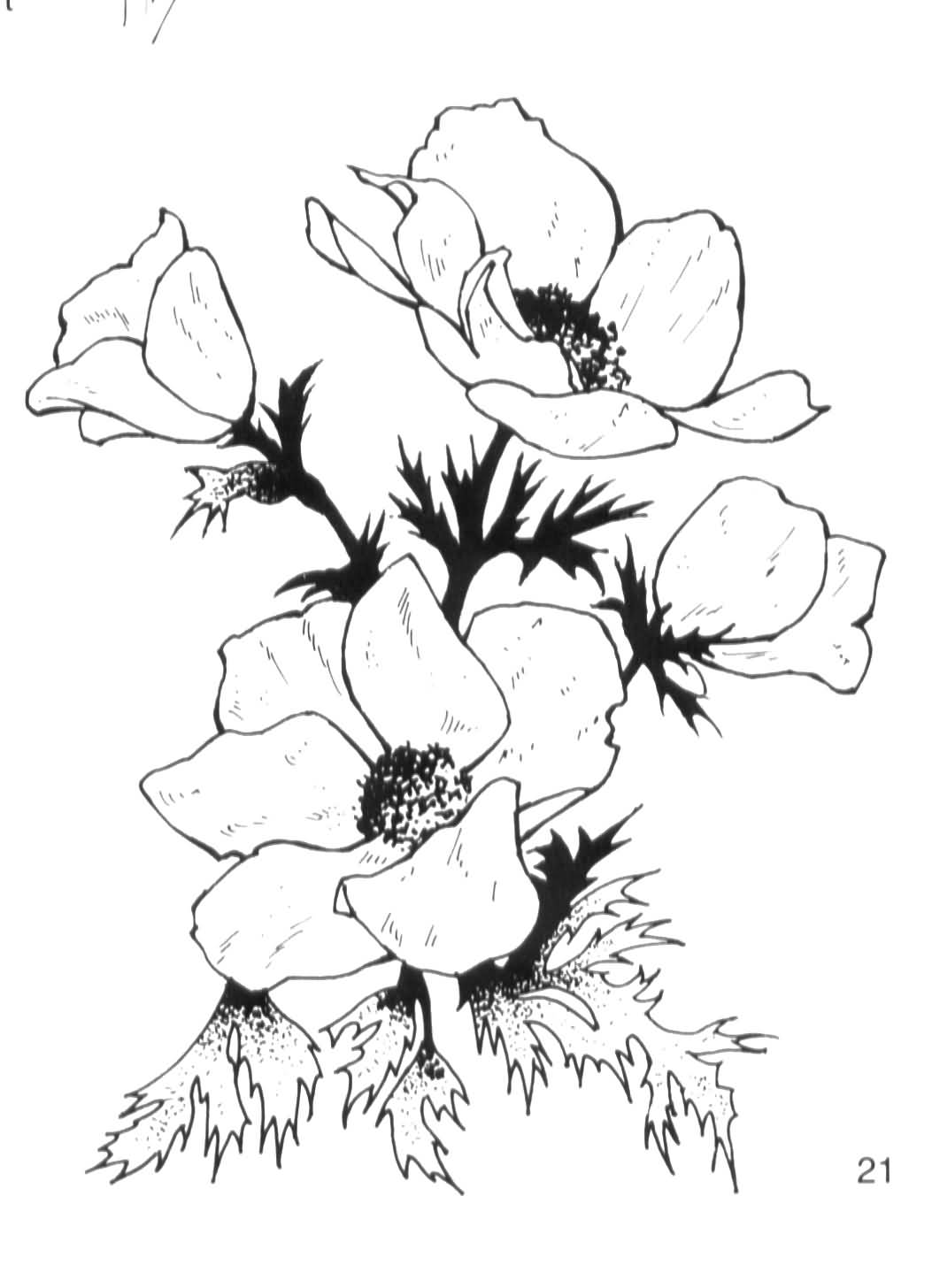 Japanese anemone flower meaning segerios segerios stunning black and white flower anemone graphic idea mightylinksfo Image collections