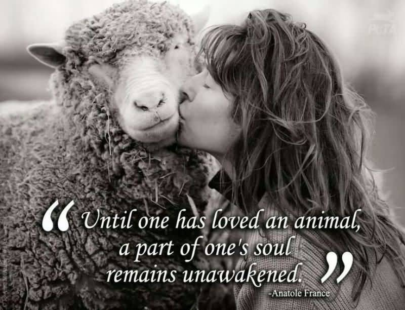 Until one has loved an animal a part of one's soul remains unawakened - Anatole France (2)