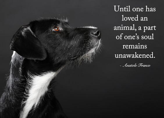 Until one has loved an animal a part of one's soul remains unawakened. Anatole France