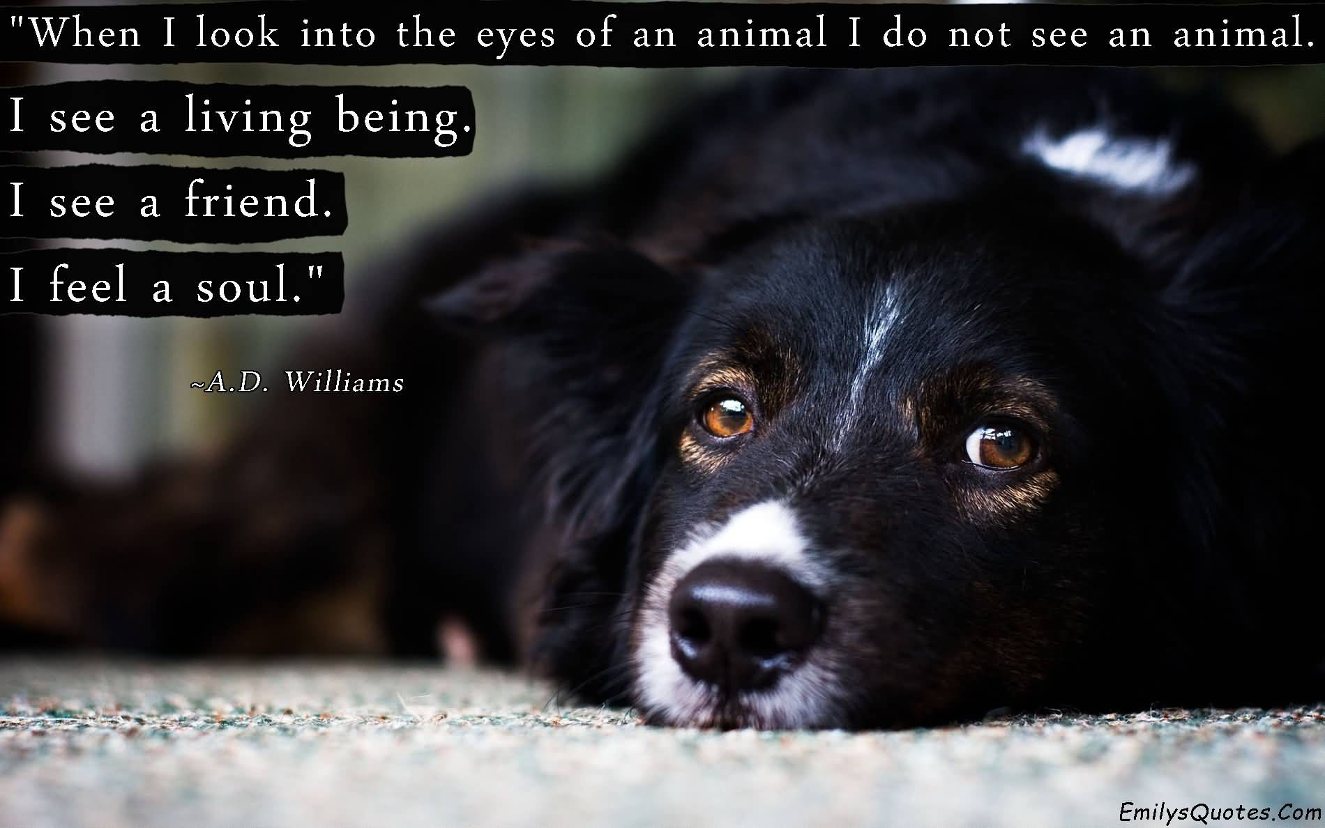 When i look into the eyes of an animal - A.D. Williams