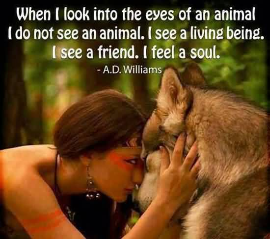When i look into the eyes of an animal i do not see an animal - A.D. Williams