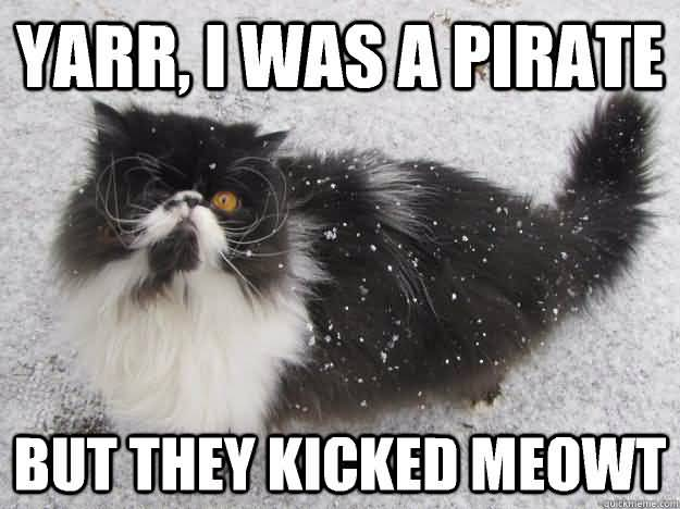 Yarr i was a pirate but they kicked meowt lovely cat newspaper meme segerios com segerios com