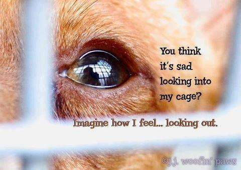 You think it's sad looking into my cage imagine how i feel looking out