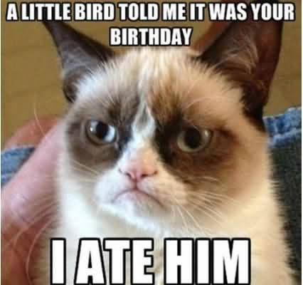A little bird told me it was your birthday i ate him