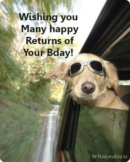 Funny birthday pictures for guys segerios segerios best wishing you many happy returns of you birthday funny dog voltagebd Choice Image