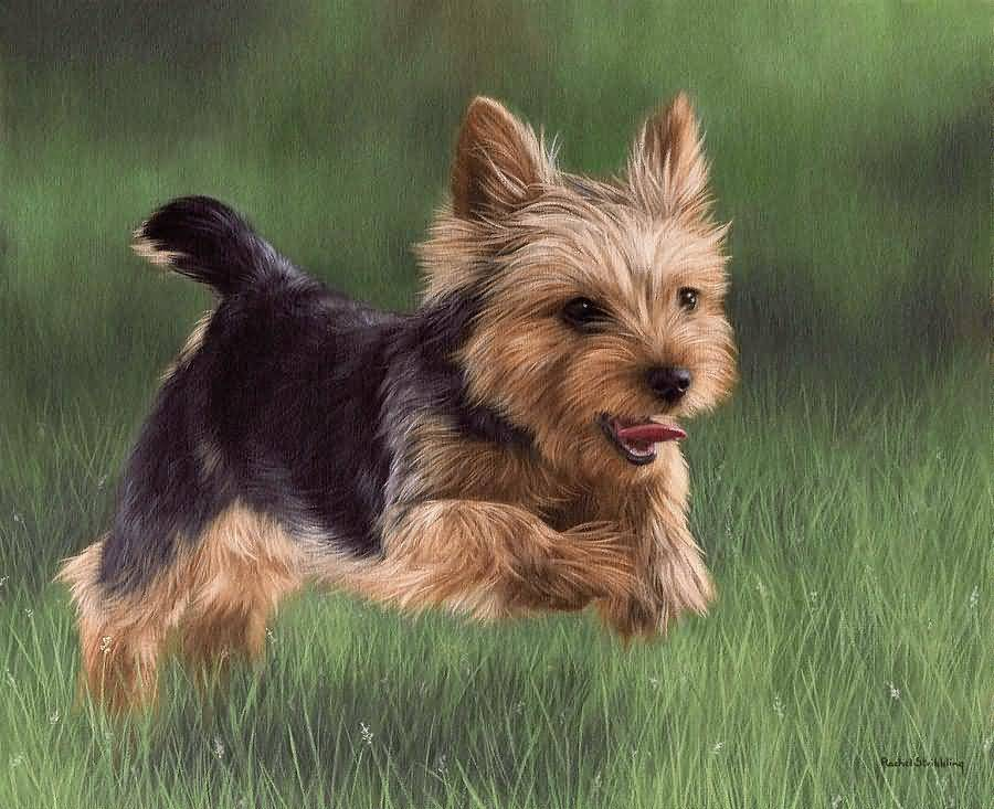 Cutest Yorkshire Terrier Dog Puppy Jumping Sketch