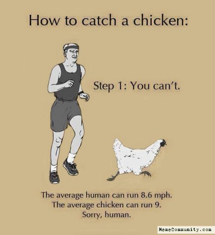 How to catch a chicken you can't