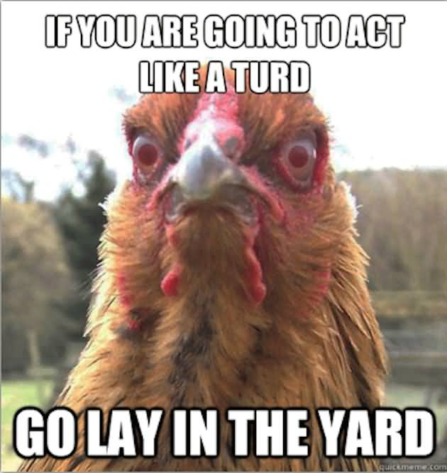 If you are going to act like a turd go lay in the yard