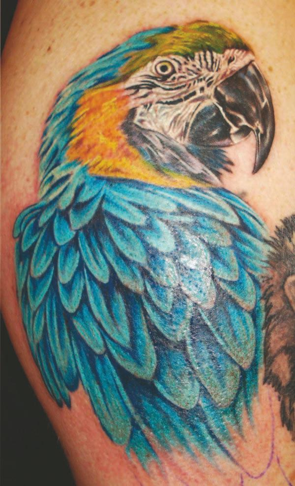 Wonderful Aqua Parrot Tattoo Design On Men Shoulder