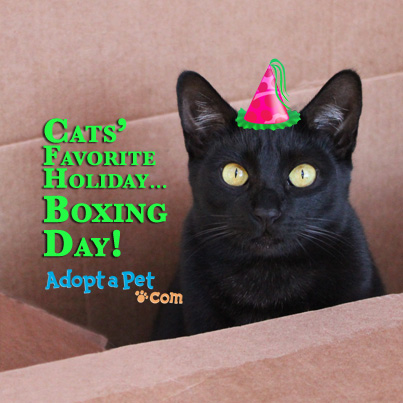 Boxing Day Wishes 41