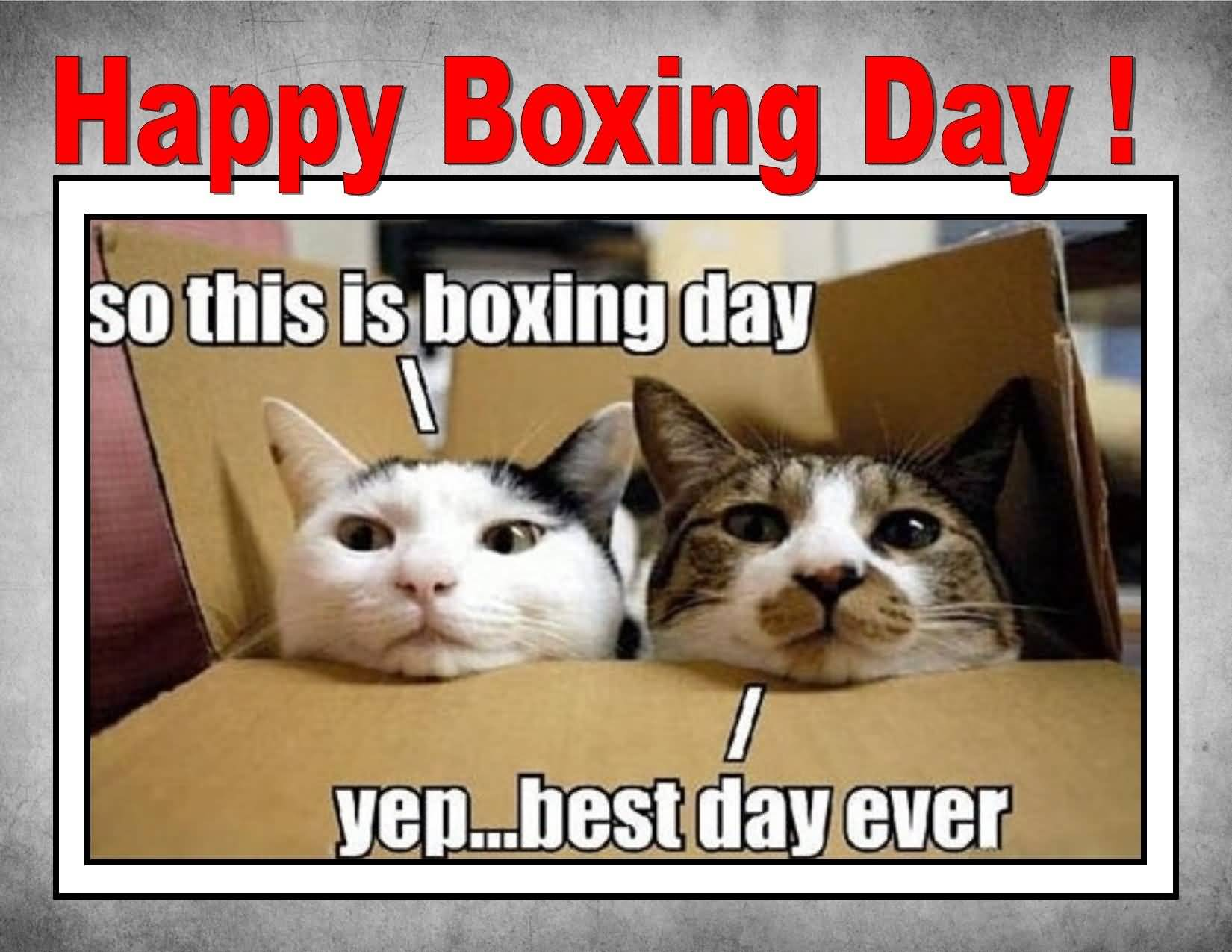 Boxing Day Wishes 49