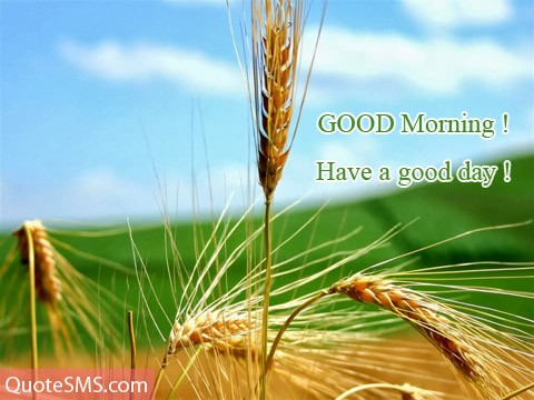 Good Morning Wishes 43