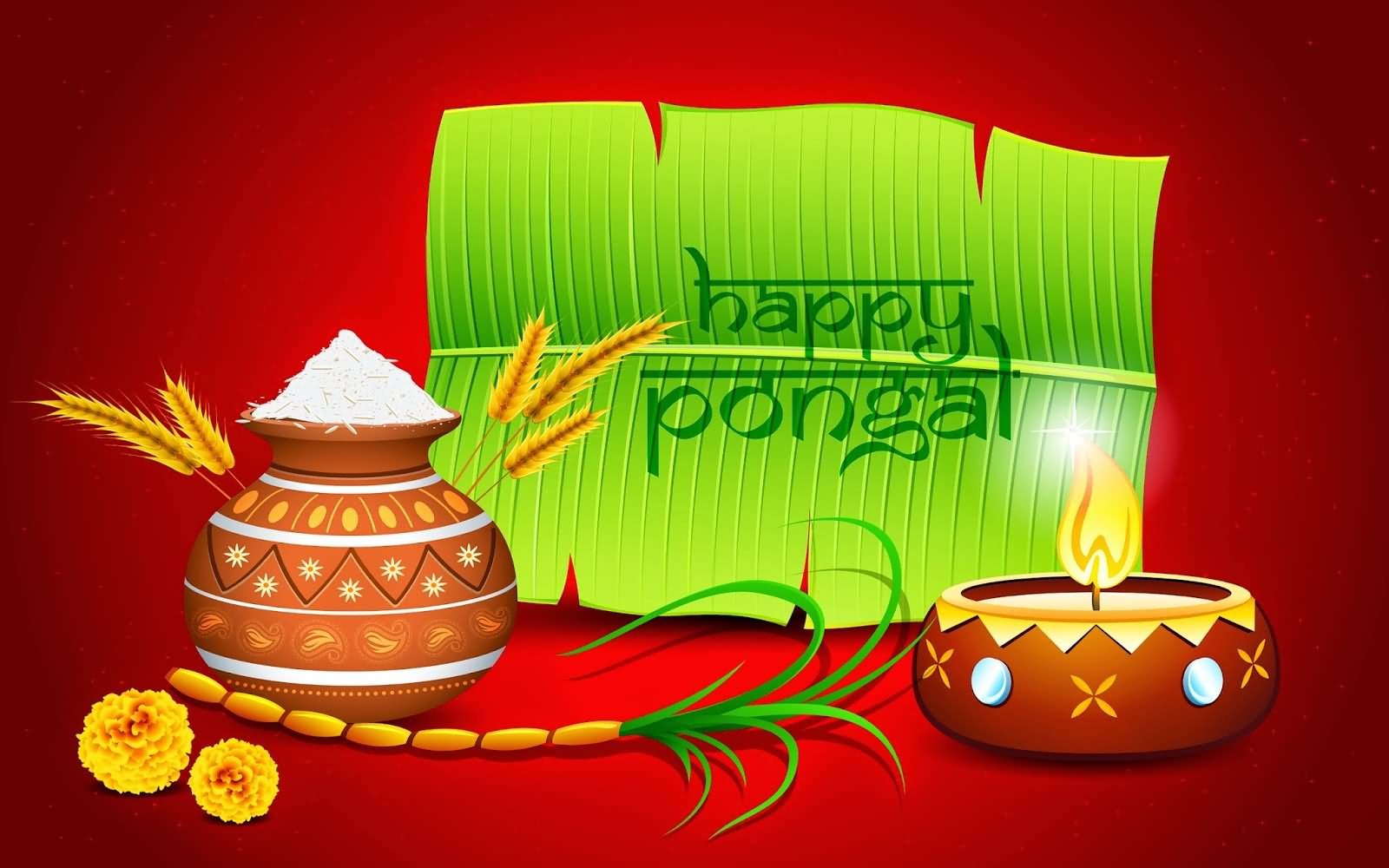 40 Most Amazing Pongal Day Wishes Pictures Stock