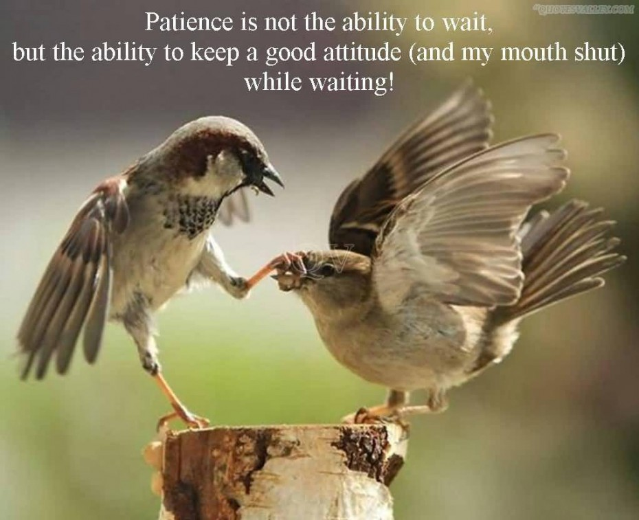 Patience Quotes 061