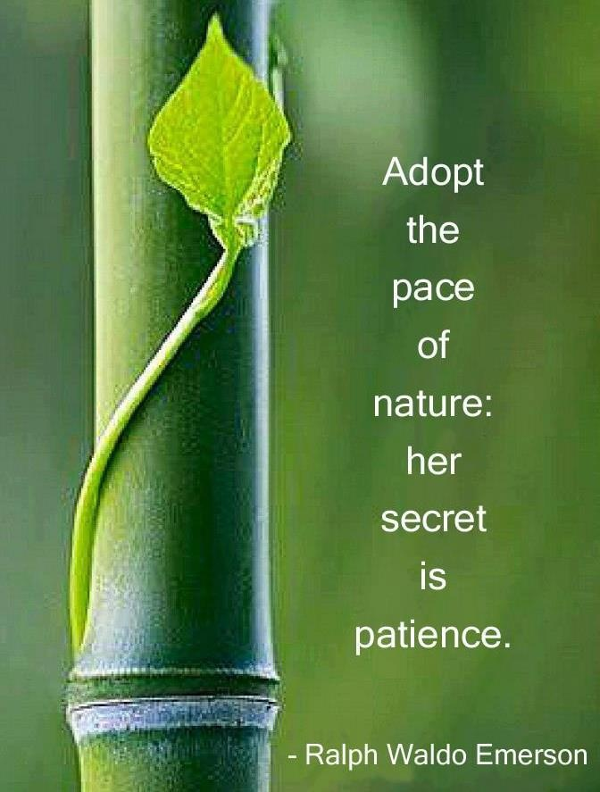 Patience Quotes 062