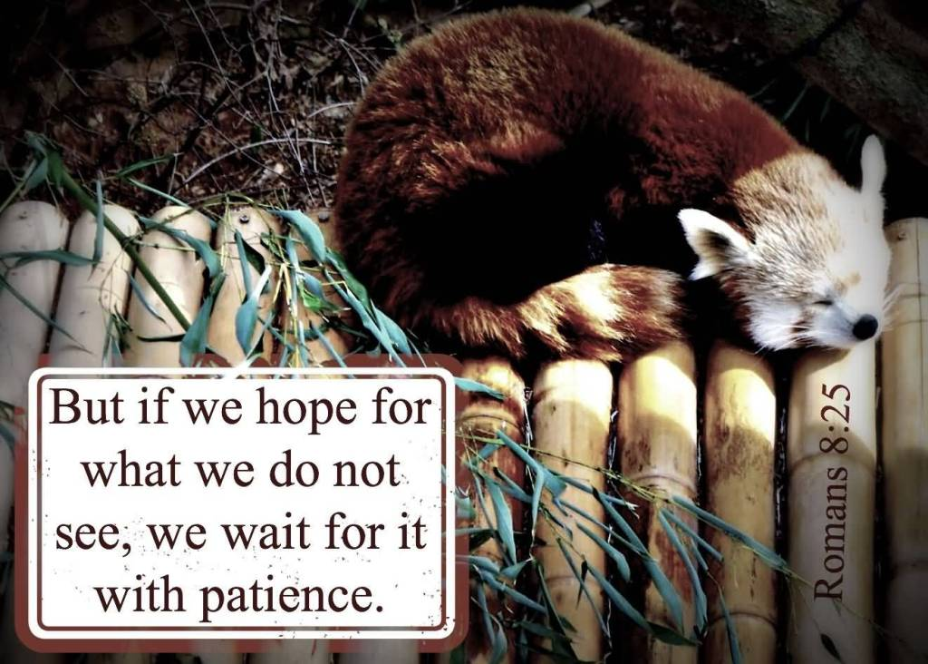 Patience Quotes 076