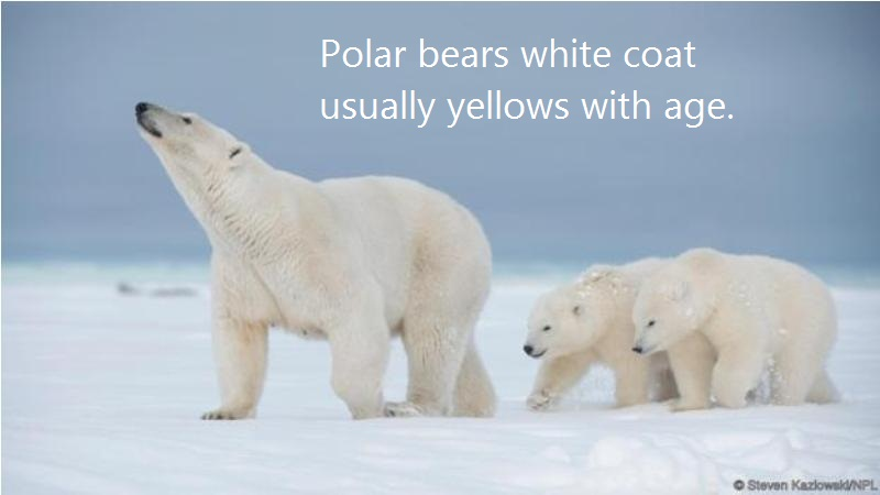 01 @ Polar Bears Facts