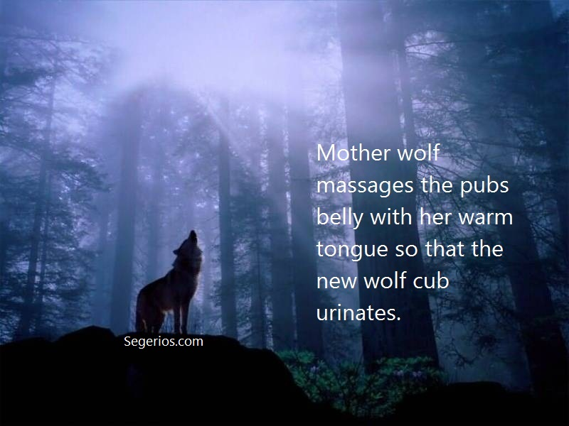 02 @ Wolfs Facts