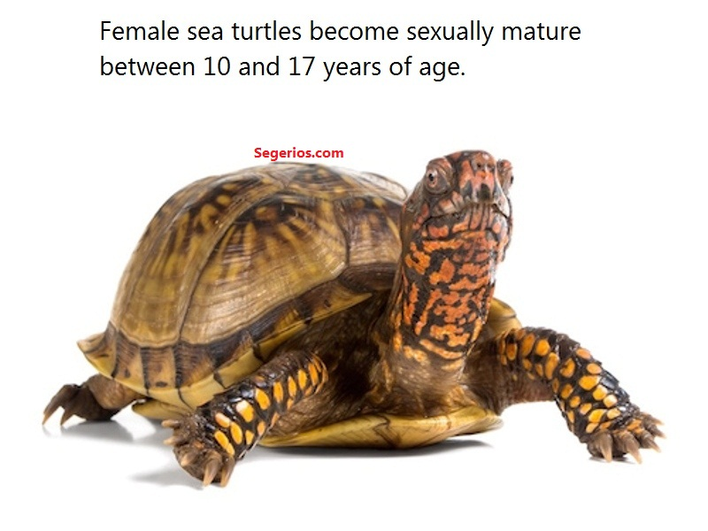 Turtles Facts