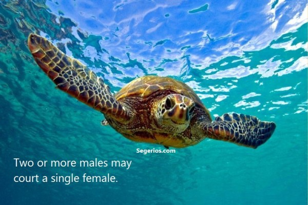 04 @ Turtles Facts