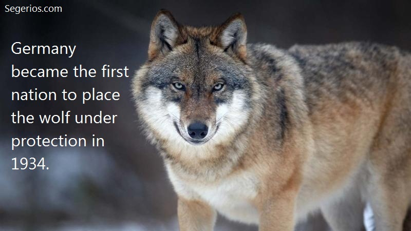 04 @ Wolfs Facts