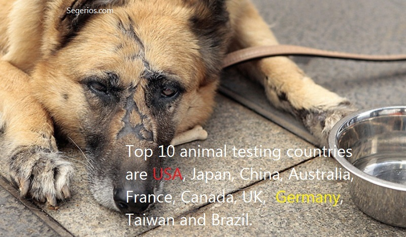 05 @ Animal Abuse Facts