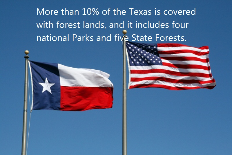 05 @ Texas Facts