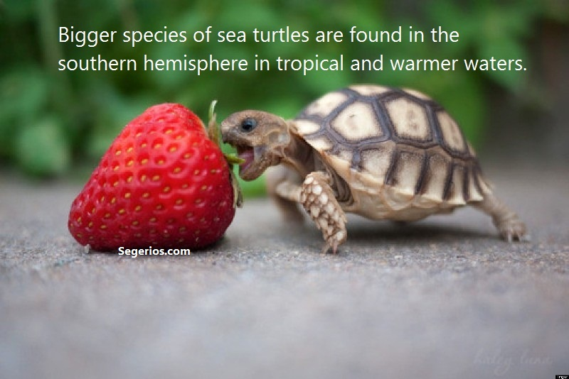 05 @ Turtles Facts