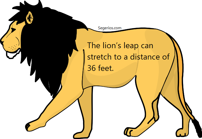 07 @ Lion Facts