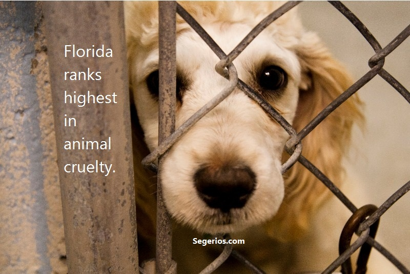 08 @ Animal Abuse Facts