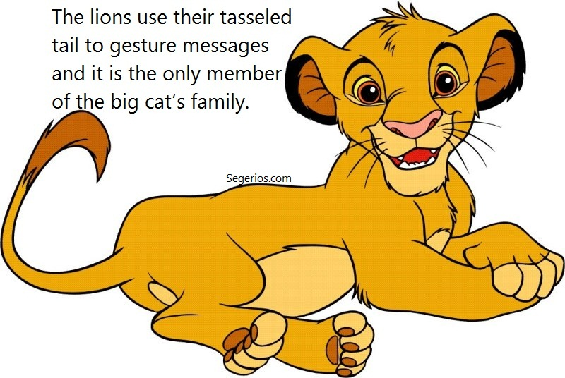 09 @ Lion Facts