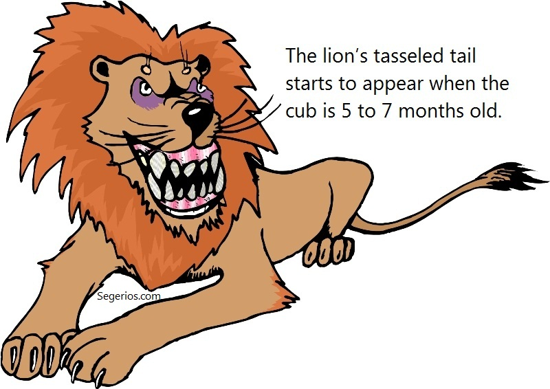 10 @ Lion Facts