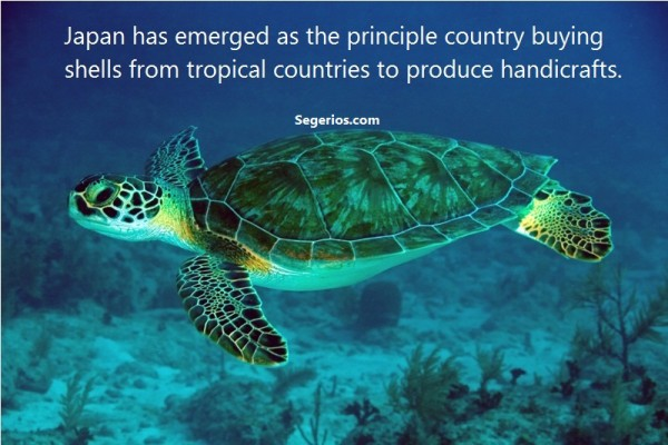 10 @ Turtles Facts