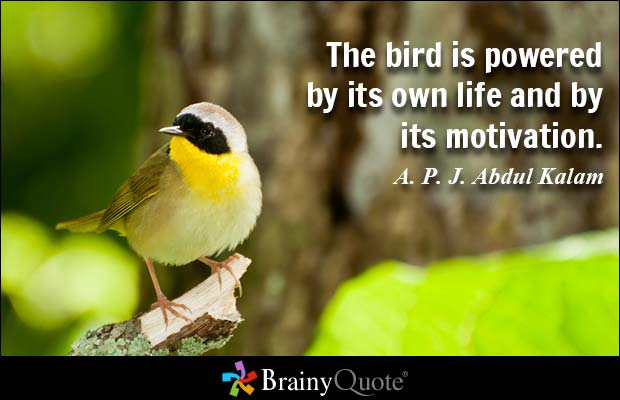 20 @ Birds Sayings