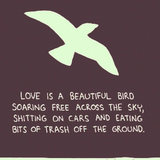 35 @ Birds Quotations