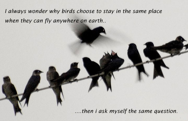 39 @ Birds Quotations