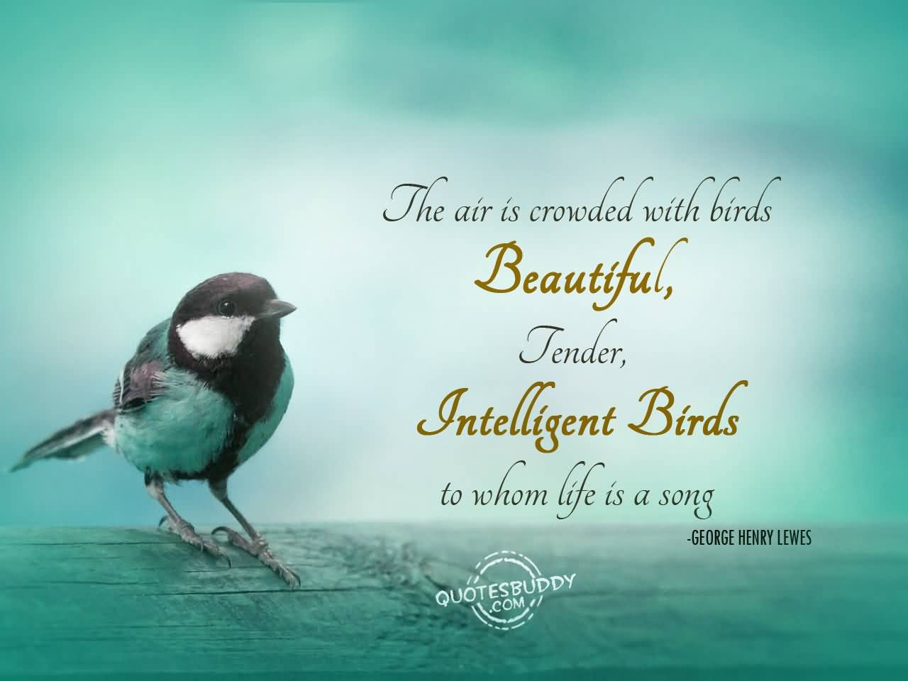 42 @ Birds Quotes and Sayings