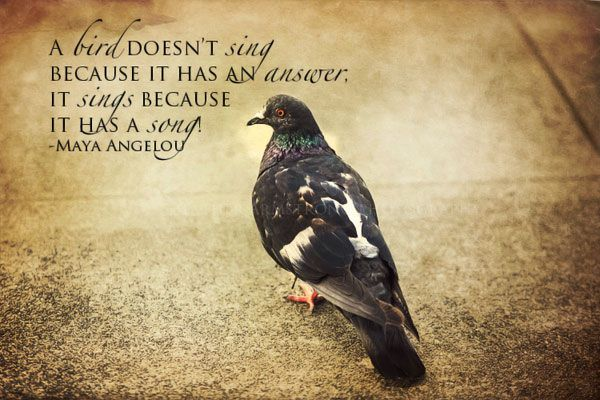 44 @ Birds Quotes and Sayings