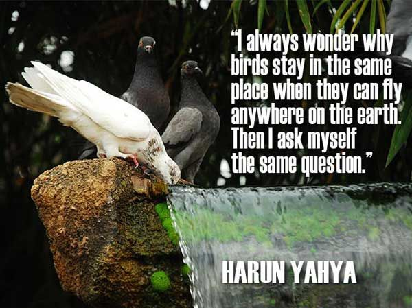 46 @ Birds Quotes and Sayings