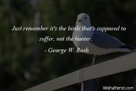 50 @ Birds Quotes and Sayings