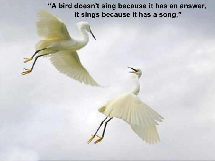 51 @ Birds Quotes and Sayings