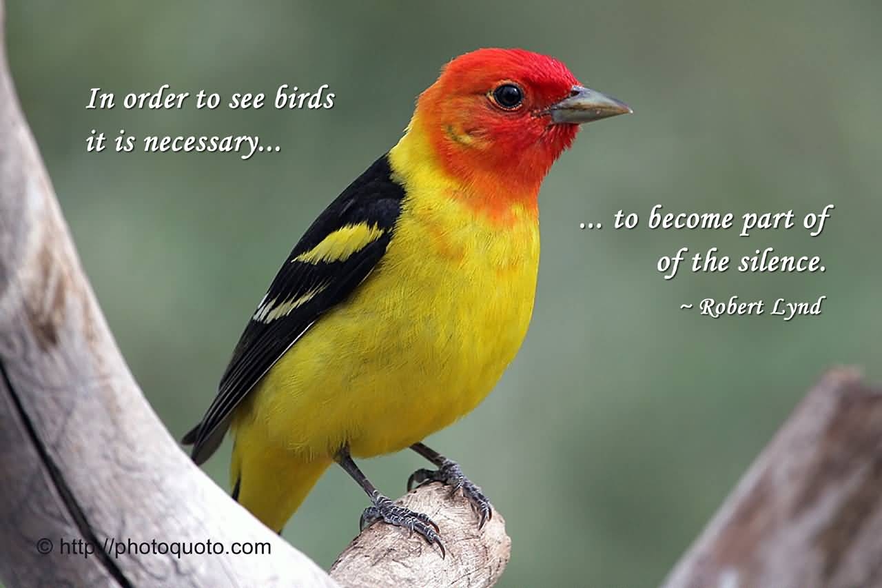 52 @ Birds Quotes and Sayings