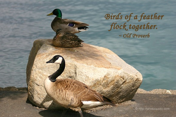 54 @ Birds Quotes and Quotations