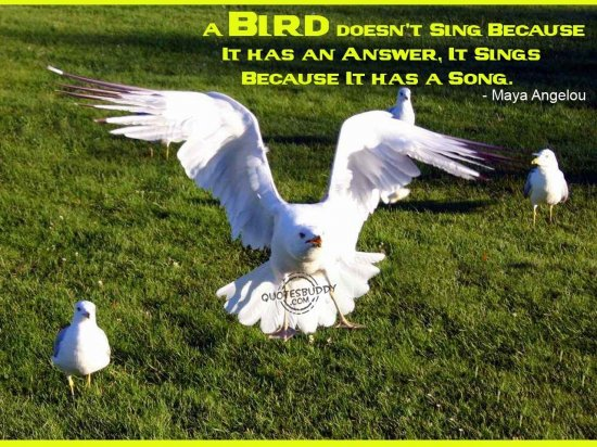 63 @ Birds Quotes and Quotations