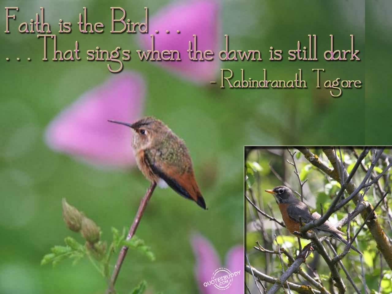 66 @ Birds Quotes Facebook